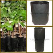 Пакети для саджанців Вирощування рослин Вирощування хвойних