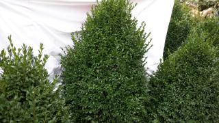 Sell moulded boxwood
