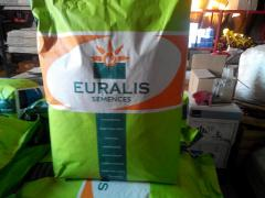 Sell sunflower seeds Euralis
