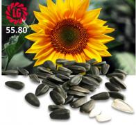 Sell sunflower seeds Limagrain