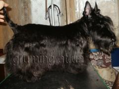 Стрижка собак и котов. Днепропетровск